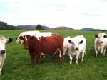 Herd 2