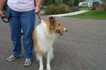 Tim & Jeannette's dog - 2007-10-06 008