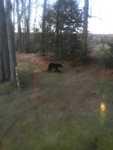 Cathy Bear 160510