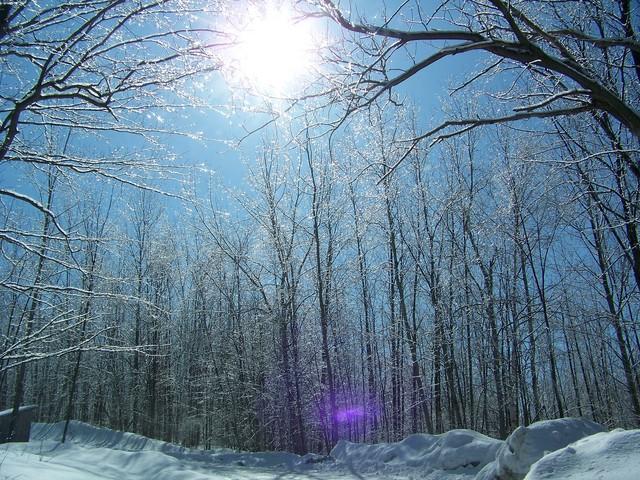 ice storm 2008 009