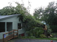 Highlight for album: Tree Falls On Old Chandler House Where Dusty Trail Realty Is On Main Street