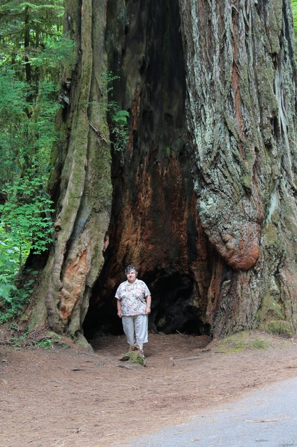 The big and small of it. I knew Paul Bunyon was big, but this is outrageous! How big are redwoods? Helga put its into perspective. We took some road tours deep into the Redwoods today. Some of the roads through the big trees are a tight fit - IMG 3977