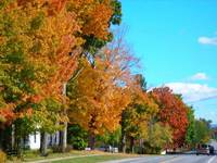 Highlight for album: Some Fall Foliage Photos from Sandy Maloney - Oct 12, 2008