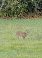 Highlight for album: Wildlife Photo's